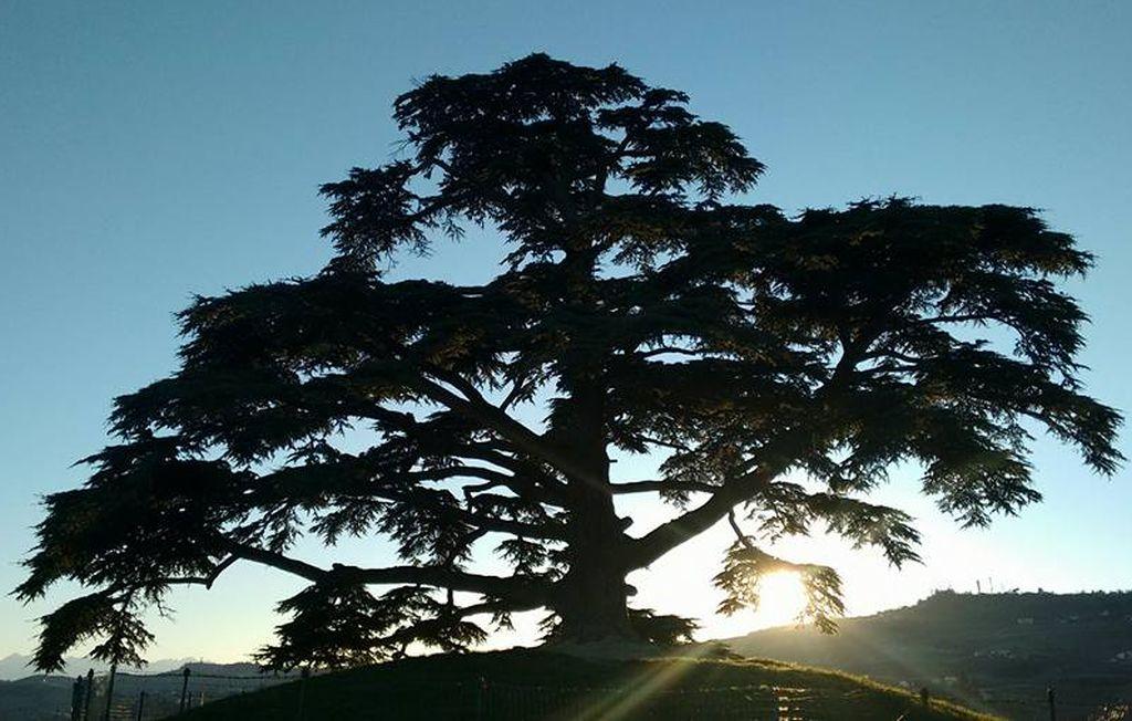 GMG diocesana «Nel silenzio del grande cedro»